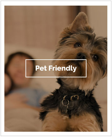 Pet Friendly el Conquistador Hotel