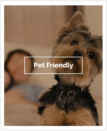 Pet Friendly el Conquistador Hotel